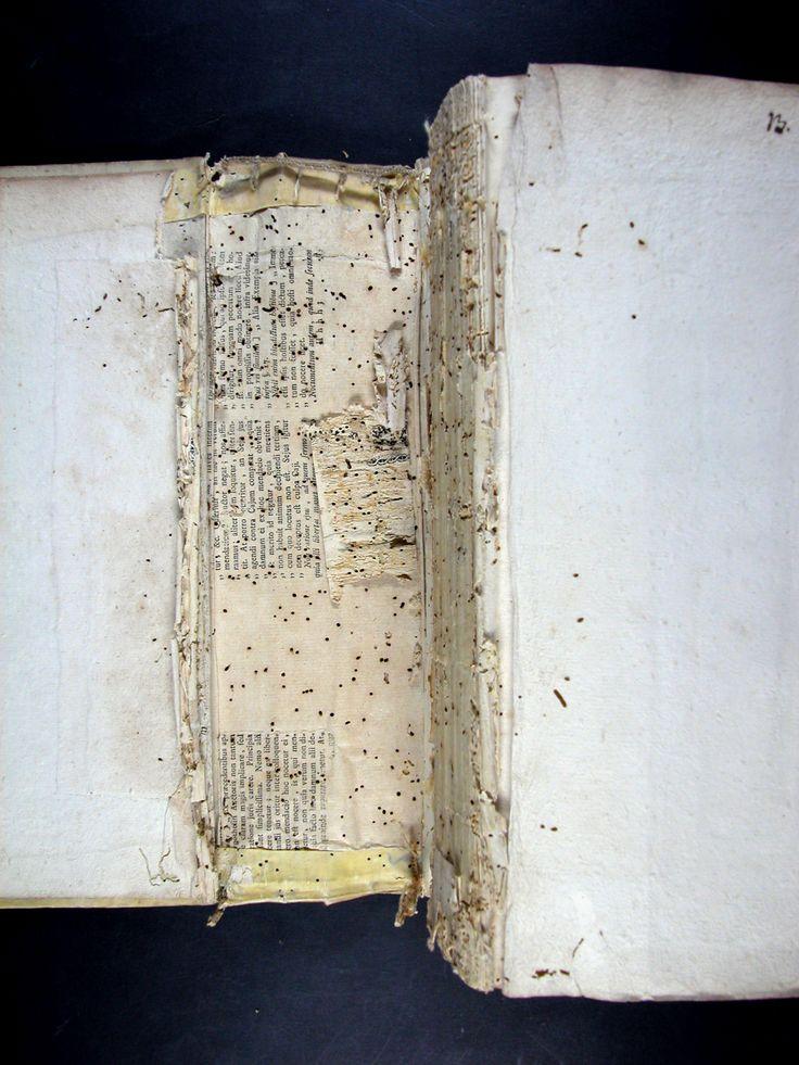 1. Bloc del llibre, neteja mecànica, neteja humida, reintegració de perforacions d'insectes, aplanat d'arrugues, restauració de gravats. 2.  Enquadernació en pergamí tapa dura, neteja,reintegració de perforacions d'insectes i muntatge de nou.