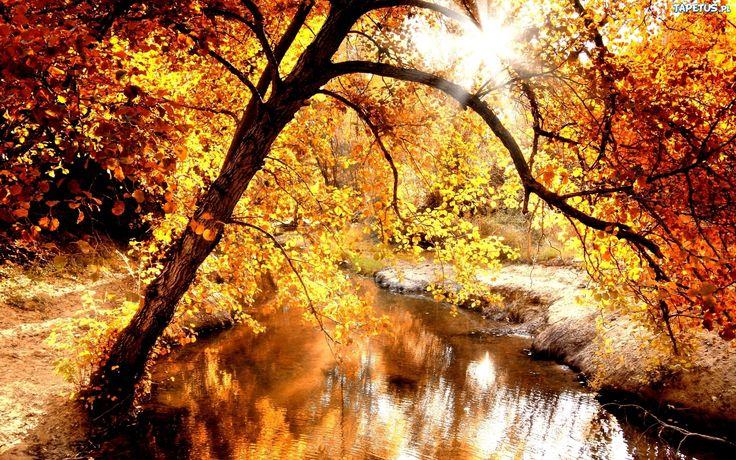 złota jesień tapety - Szukaj w Google