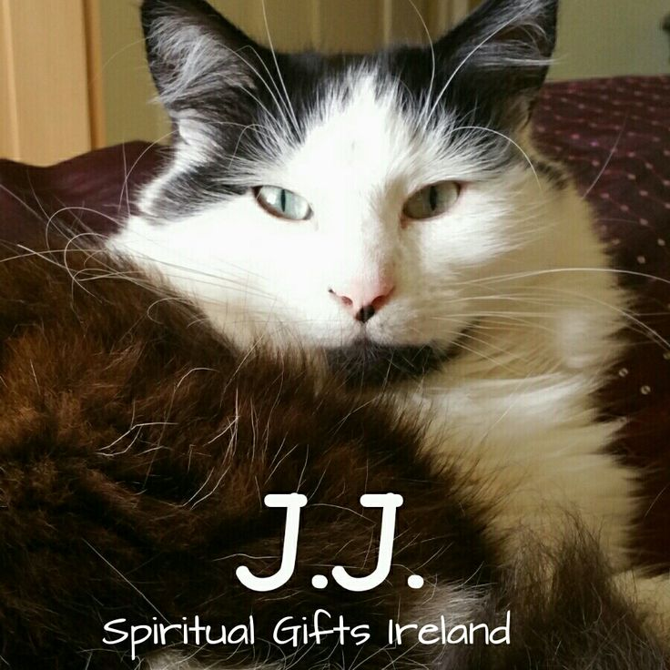🐾🐱🐾This is J.J. the first team member at Spiritual Gifts Ireland. He is the Chief Supervisor and Overseer. He constantly interrupts photo shoots looking for cuddles. J.J's name is an amalgamation of me Jenny and my partner Jason. A bit cheesy but hey we're a cheesy kind of couple🐾🐱🐾