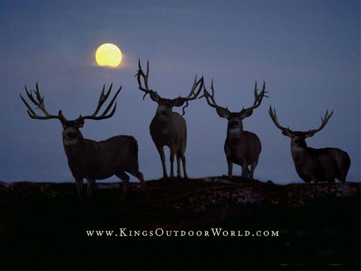 Kings Of Wyoming - Kings Of Wyoming
