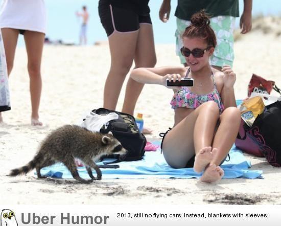 Panama City Beach Satire