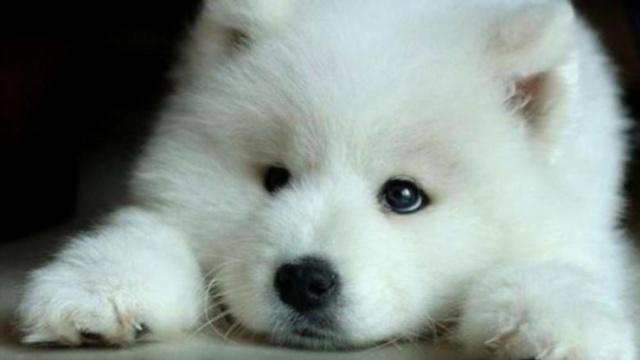 동물 cuty~cuty  #puppy