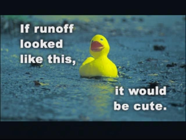 Stormwater Run-off is NOT Cute- NO, IT CAN BE CUTE