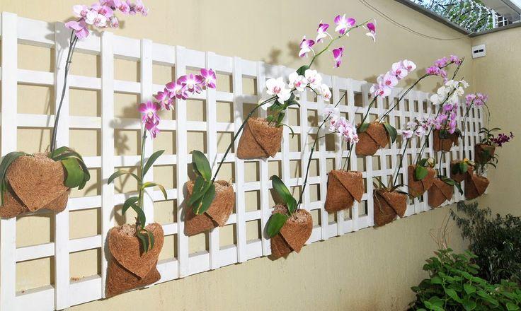 jardinagem orquideas - Pesquisa Google