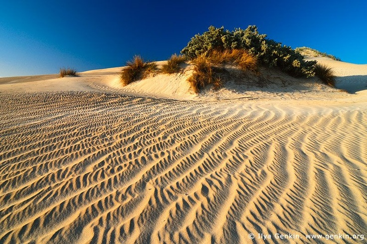 Patterns on Sand Dunes_Image ID_GUNYAH-DUNES-COFFIN-BAY-0004 Photo © Ilya Genkin_A classic nature picture, Gunyah Beach Sand Dunes in the Coffin Bay National Park, South Australia. Sand dunes on the Gunyah Beach are one of the highlights on a trip to the Coffin Bay National Park. These Coastal sand dunes are constantly moving by the power of the wind.