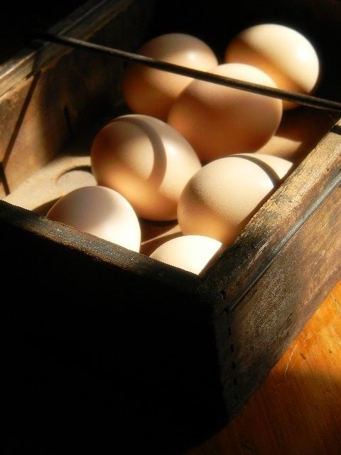 I absolutely loved my chore of hunting for eggs around the hen house and yard. It was like Easter every day! Until I stepped on that old rusty nail hidden in the chicken manure. Kids shouldn't be walking barefoot on a farm, but what did we know back then?
