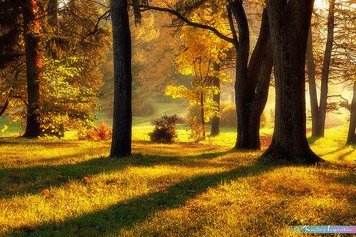 Autumn in My Heart *A Beautiful Nature* | Autumn has arrived… | Flickr