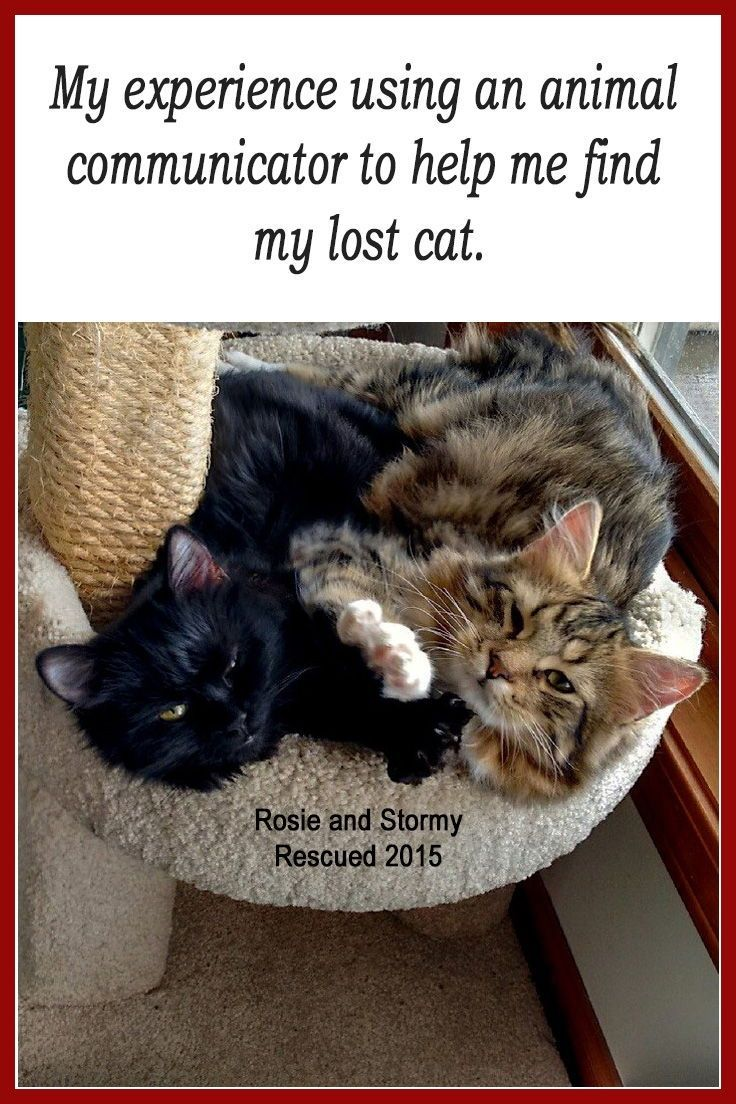My Experience With An Animal Communicator Animals Saving Cat