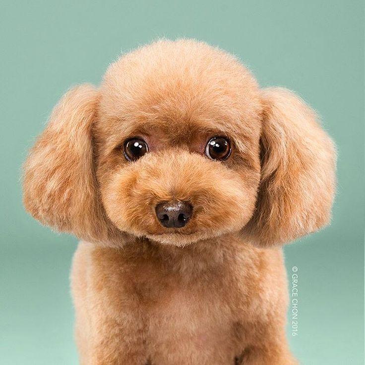 Série apresenta modelos caninos fotografados em looks modernos e bem descolados. É imperdível!