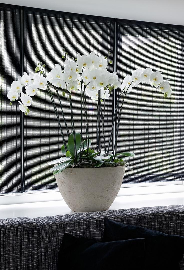 Witte orchidee in strak interieur. Dat bloemen en planten ook prima passen in een moderner en strak interieur bewijst deze foto. Zet dan wel planten van dezelfde soort in een strakke pot of vaas om een mooi effect te krijgen. Ik zeg, de kerstboom is er uit, dus aanschaffen die plant....