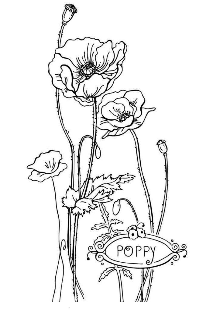 free poppy page to color