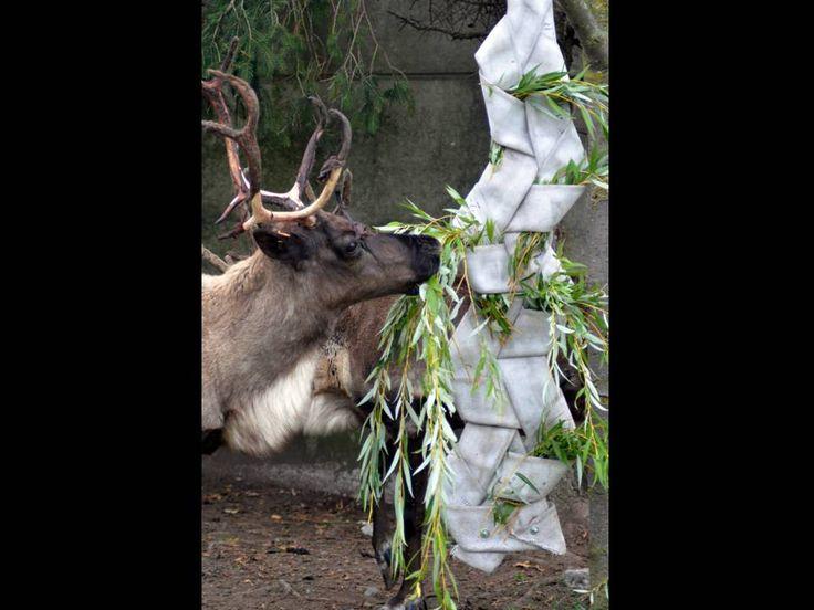 Ol fire-hose ungulate feeder (c) Toronto Zoo