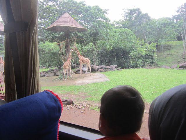 Tukang Nguplug: Uji Ketahanan Kaki di Taman Safari Prigen