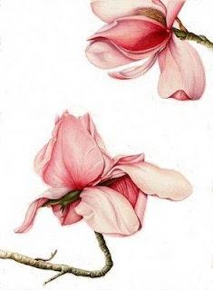Angela Maria Russo: Pittura Botanica - Botanical Art