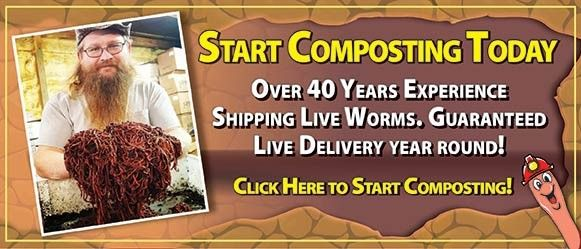 Over 40 years of Red Wigglers Worm Composting experience. We sell live red wiggler worms year round, worm composting bins and other vermicomposting supplies.