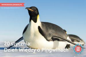 Dzień wiedzy o Pingwinach