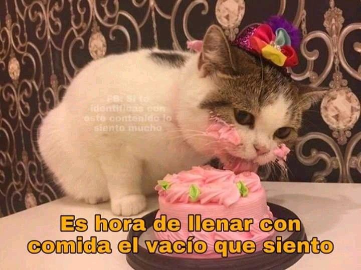 Pin De Gabrielaxiomara En Me U U Animales Bonitos Meme Gato Gatos
