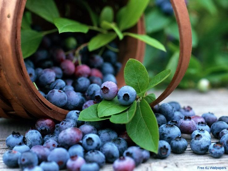 Studies Show Blue Super Fruits Reduce Computer Eyestrain and Prevent Eye Conditions.  Blueberries, bilberries and black currants are gaining positive research outcomes for strengthening the eyes.  Read more about the studies here: http://www.nutritionbreakthroughs.com/blog/2015/04/26/studies-blueberry-benefits-eyes-reduces-strain/