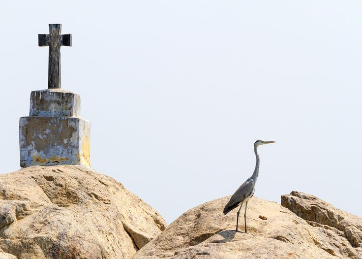 Meeting in the journey - The christian cross and heron (egret) bird on the small rock islands in Kerala backwaters, southern India.