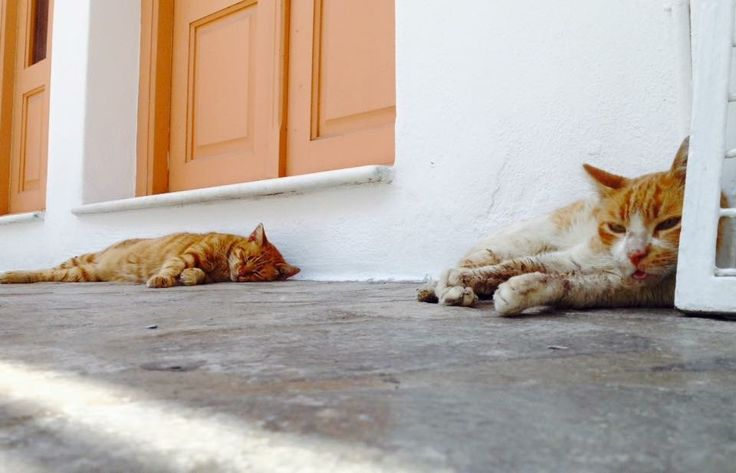 Paros: gatti arancioni