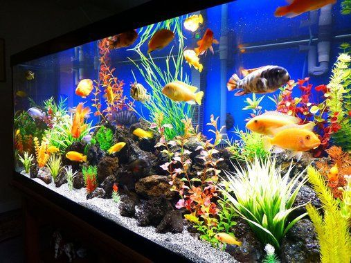 Best 25 Fresh Water Tank Ideas On Pinterest Fish Tank