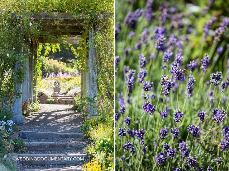 The Garden Of Old Roses At The UC Botanical Garden In Berkeley Offers  Fragrance And Beauty