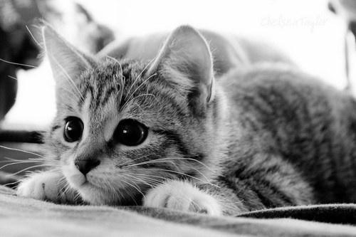 sweet kittenKitty Cat, Cat Eye, Catlady, Pets, Kittens, Big Eye, Kittycat, Adorable Animal, Cat Lady