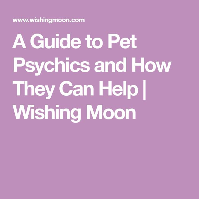 A Guide to Pet Psychics and How They Can Help   Wishing Moon
