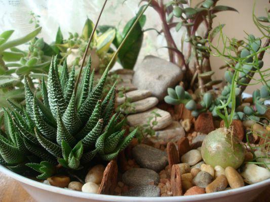 Saiba como montar um mini jardim