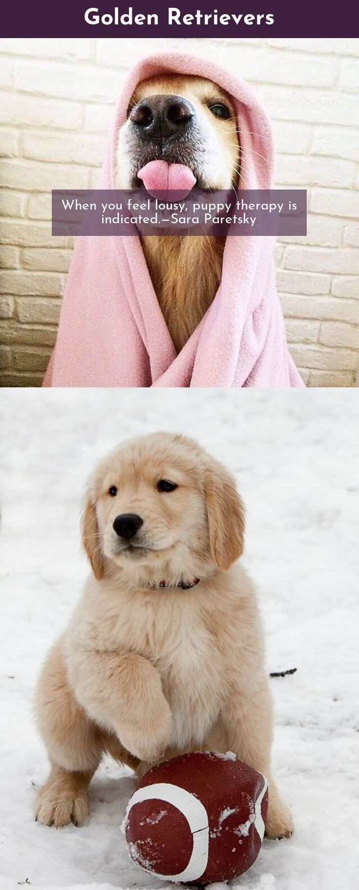 Some Things Just Fill Your Heart Without Trying Golden Retrievers