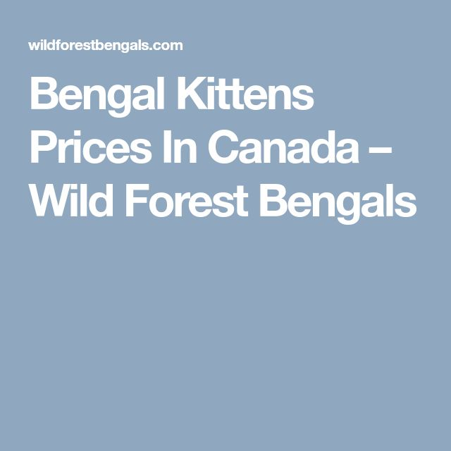 Bengal Kittens Prices In Canada – Wild Forest Bengals