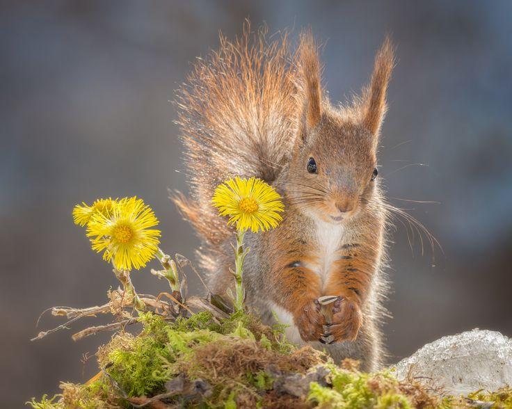 Photograph flower squirrel by Geert Weggen on 500px