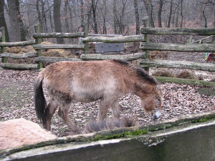 Budakeszi Vadaspark (Budakeszi közelében 0.3 km) http://www.turabazis.hu/latnivalok_ismerteto_331 #latnivalo #budakeszi #turabazis #hungary #magyarorszag #travel #tura #turista #kirandulas