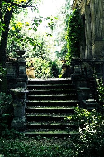 Old mossy shaded stairs.