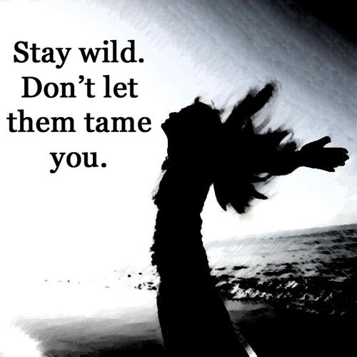 Gypsy Moon's Enchanted Chronicles - Stay wild and don't let them tame you.