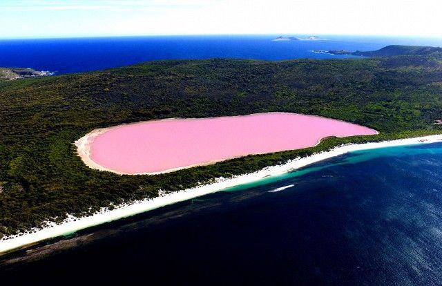 25 Best Ideas About Pink Lake Western Australia On Pinterest Lake Hillier Australia Pink
