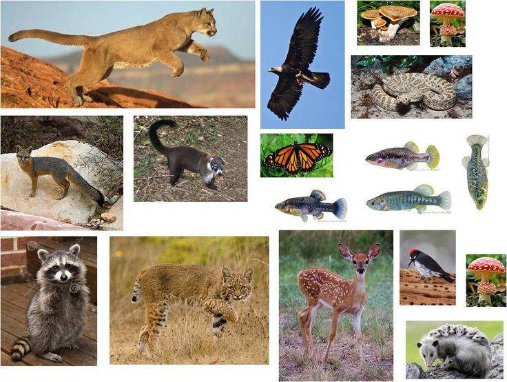 Ecosistema Bosque De Coniferas O Bosque Templado Animales