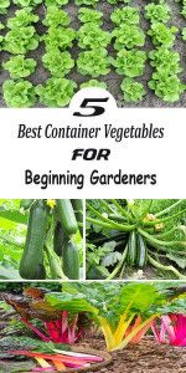 5 Best Container Vegetables For Beginning Gardeners Desertplants