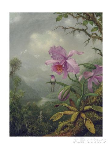 Hummingbird Perched on an Orchid Plant, 1901 Giclee Print by Martin Johnson…