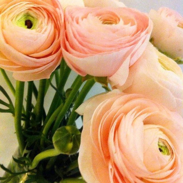 palette roses lipstick ral rouge a lvres lgres brises parfumes colors printanires on adooore
