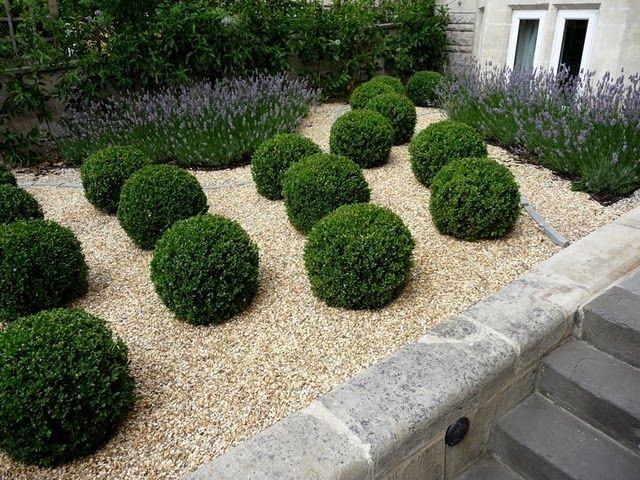 Boxwood and Lavender, Perfect #boxwood #lavender