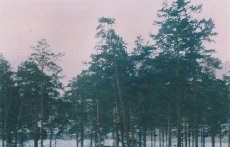 Лес за клинической больницей