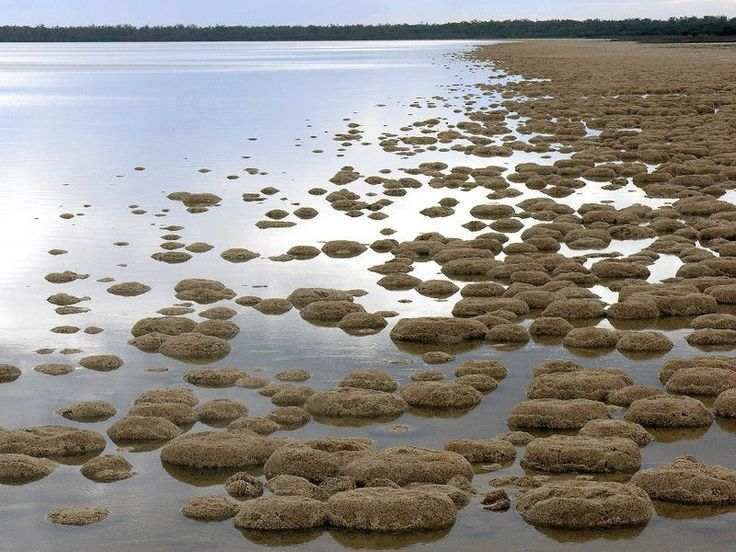 lake_clifton-inspiring-natural-design  THROMBOLITES LAKE CLIFTON AUSTRALIA