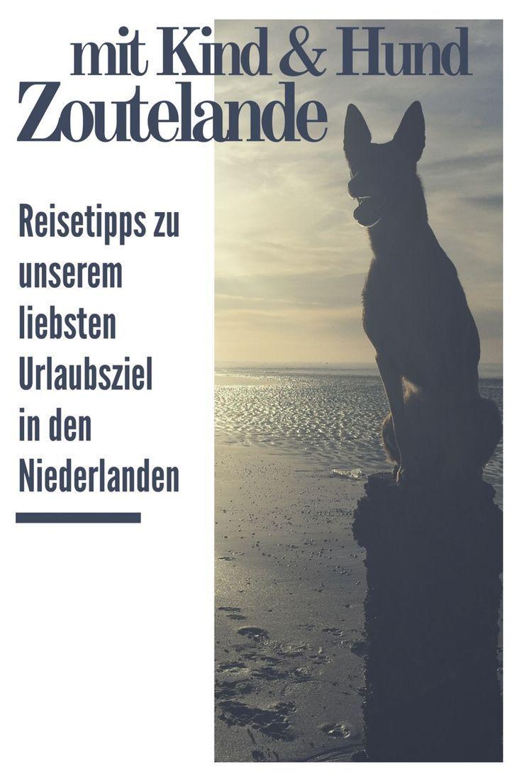 Tipps Fur Zoutelande Mit Kind Hund Unser Liebstes Ziel In Den Niederlanden Holland Mit Hund Holland Strand Urlaub Mit Hund