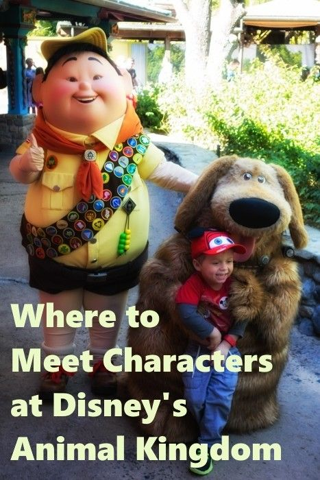 Disney World Tips & Secrets - Meeting Characters at Animal Kingdom - Click this pin for this great information from the TouringPlans blog. Learn how you can get a free TouringPlans subscription from http://www.buildabettermousetrip.com/free-touring-plans