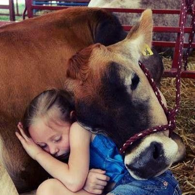 DOLLY ZEN Cows are amongst the gentlest of breathing creatures; none show more passionate tenderness to their young when deprived of them; and, in short, I am not ashamed to profess a deep love for these quiet creatures ~Thomas de Quincey ❤ Dolly