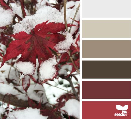 first snow hues