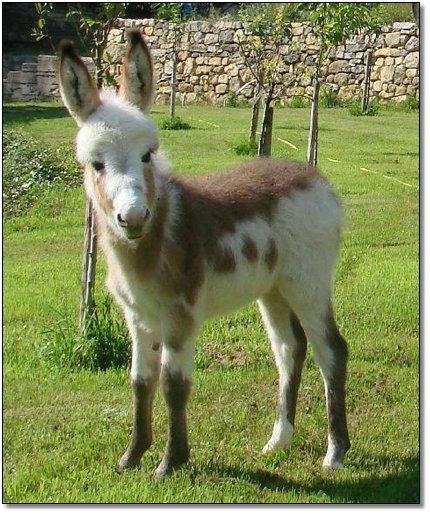 Have You Hugged Your Donkey Today?  ( I sure would if I had one like this adorable little one)