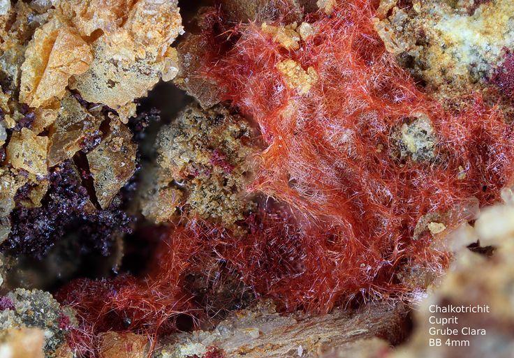 Chalkotrichit Cuprit    Clara Mine, Rankach valley, Oberwolfach, Wolfach, Black Forest, Baden-Württemberg, Germany Copyright © Stoya