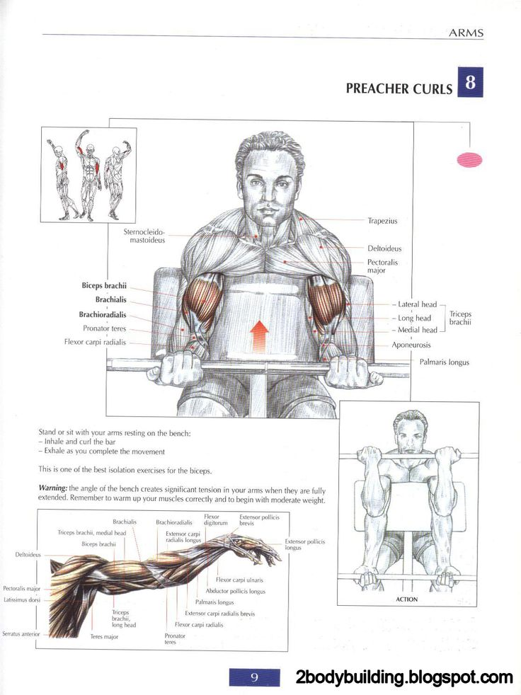 24 best Arms images on Pinterest | Exercise workouts, Workouts and ...